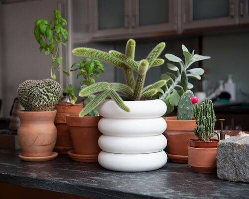 Indoor Planters That Are Modern