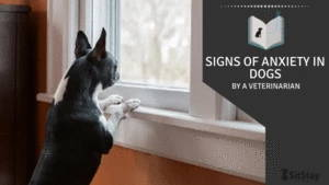 Signs of Anxiety in Dogs By A Veterinarian