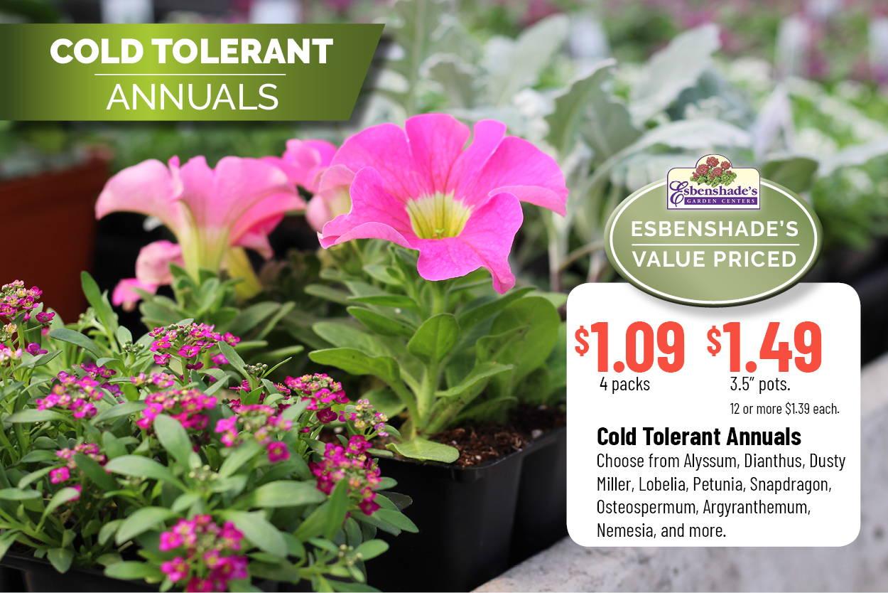 Cold Tolerant Annuals | $1.09 4 packs | $1.49 3.5