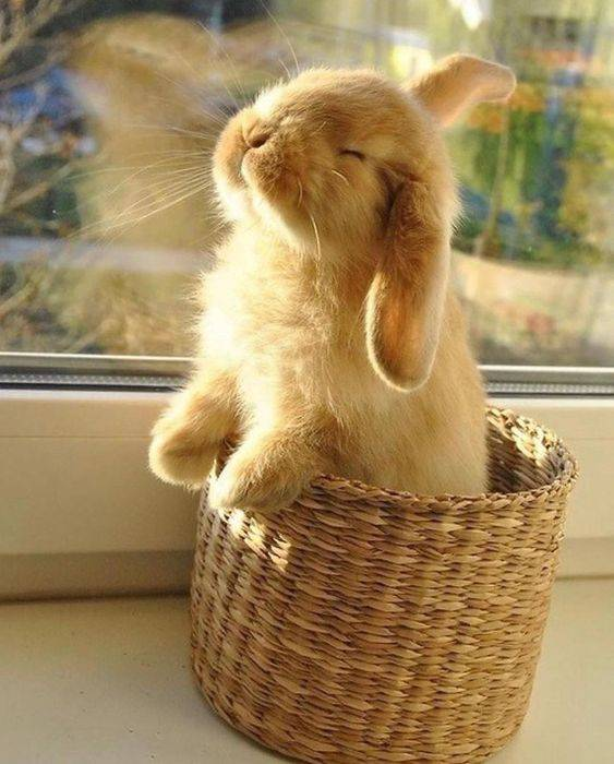 bunny-caring