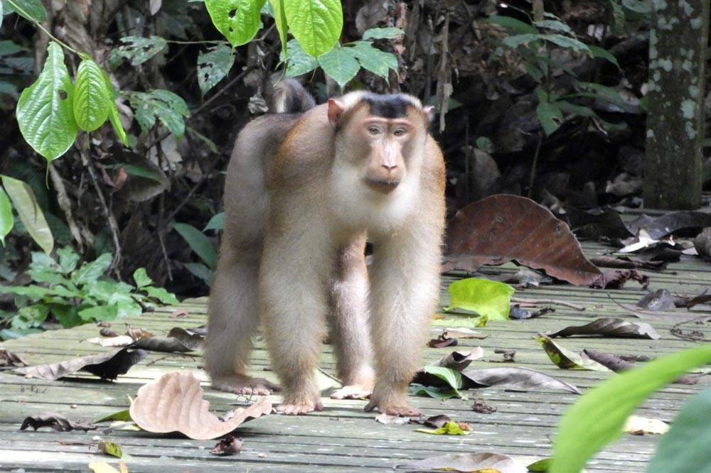 Travelbay Borneo Tours - Neil & Fiona in Borneo - Customer Review - Kinabatangan River safari, wildlife