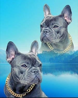 super imposed dog art with gold chain