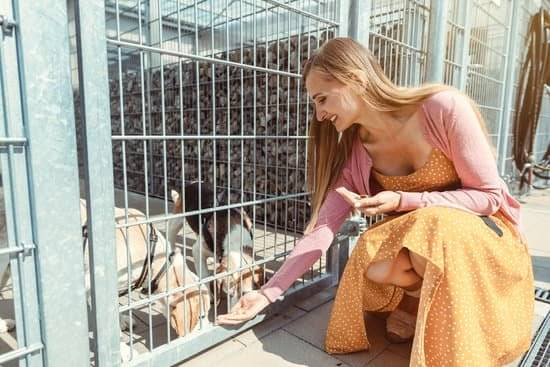woman feeding dogs in a cage
