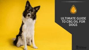 Ultimate Guide To CBG Oil For Dogs