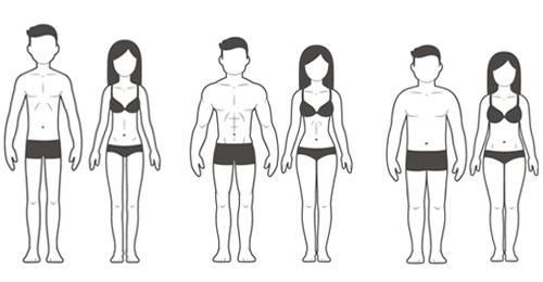 Körpertypen Sheldon Hardgainer Softgainer