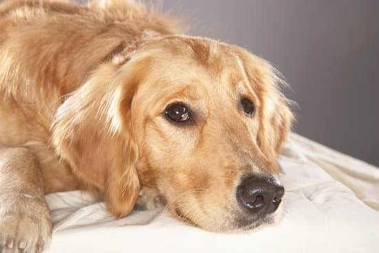 Lymphoma in Dogs: Everything Owners Need to Know