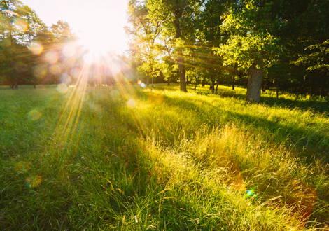 Die Sonne als Vitamin D-Quelle