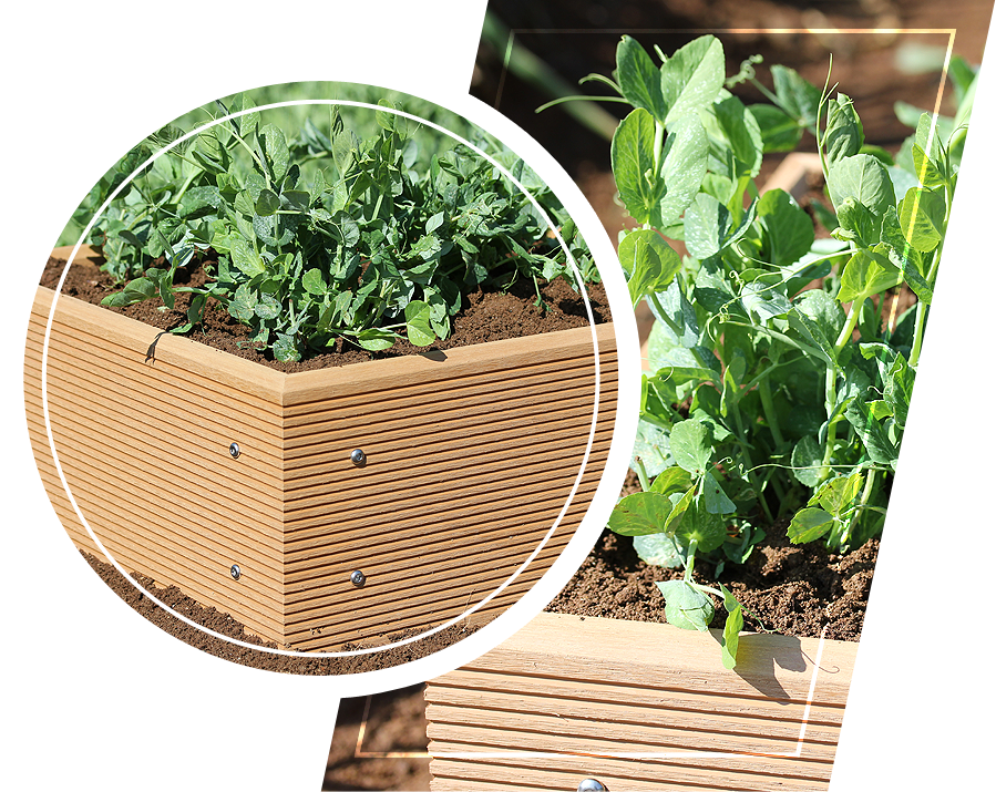 Plants on a raised bed garden planter