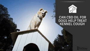 Can CBD Oil For Dogs Help Treat Kennel Cough