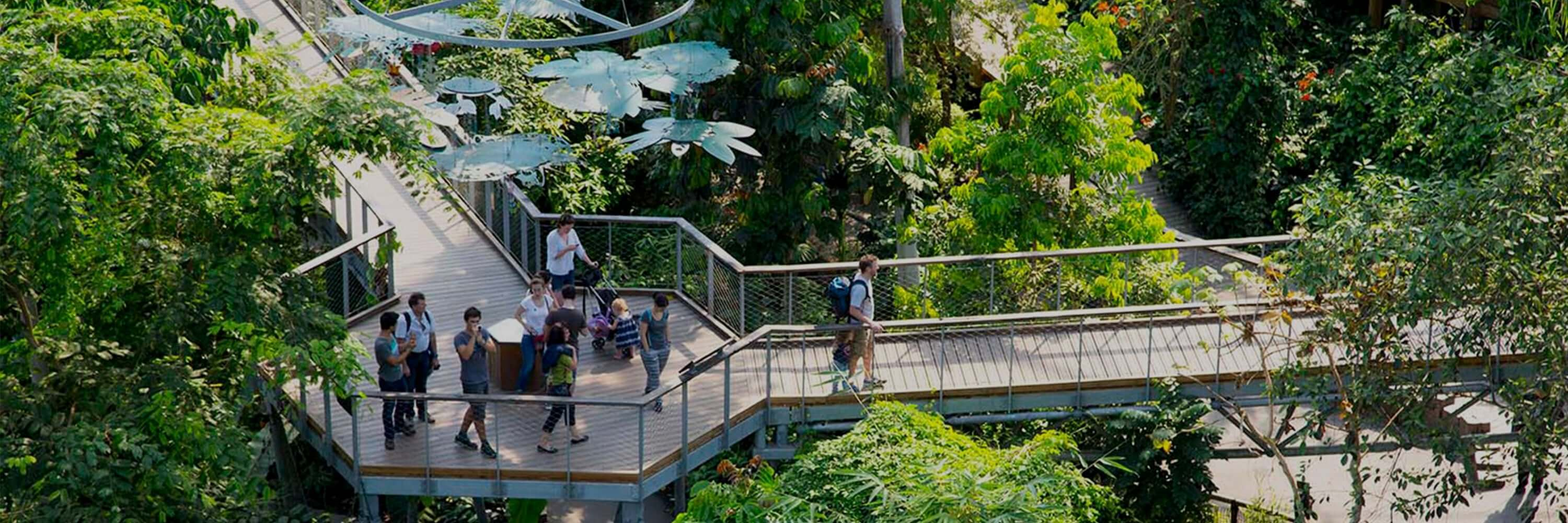 Treetop Walkway at The Eden Project
