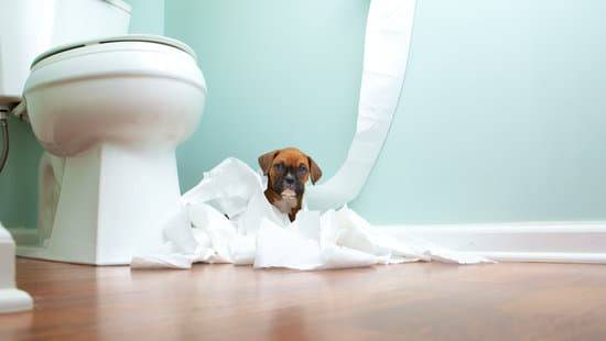 A boxer puppy sits wrapped in toilet paper in front of a toilet