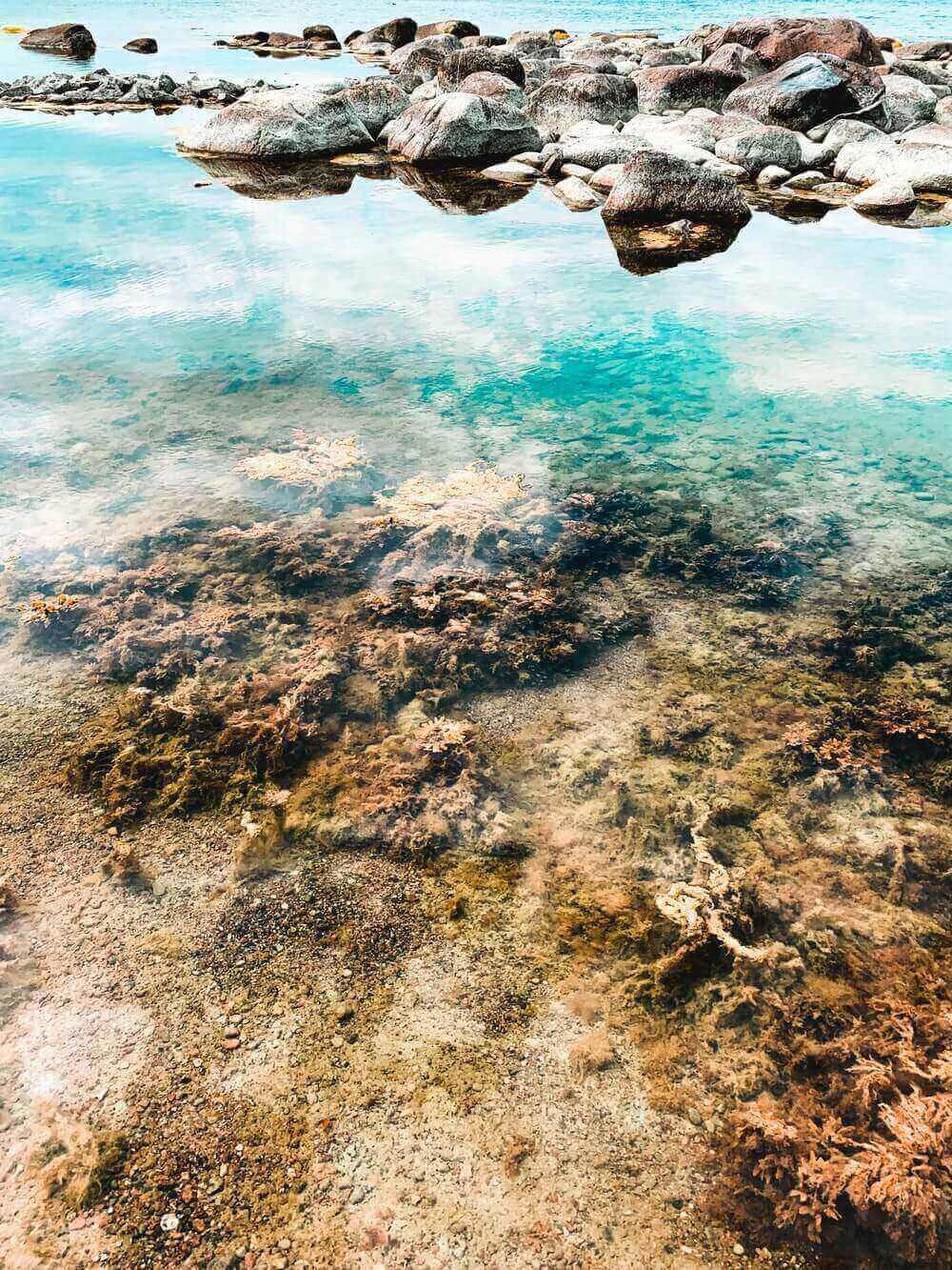 Les bienfaits des algues corallines pour la peau