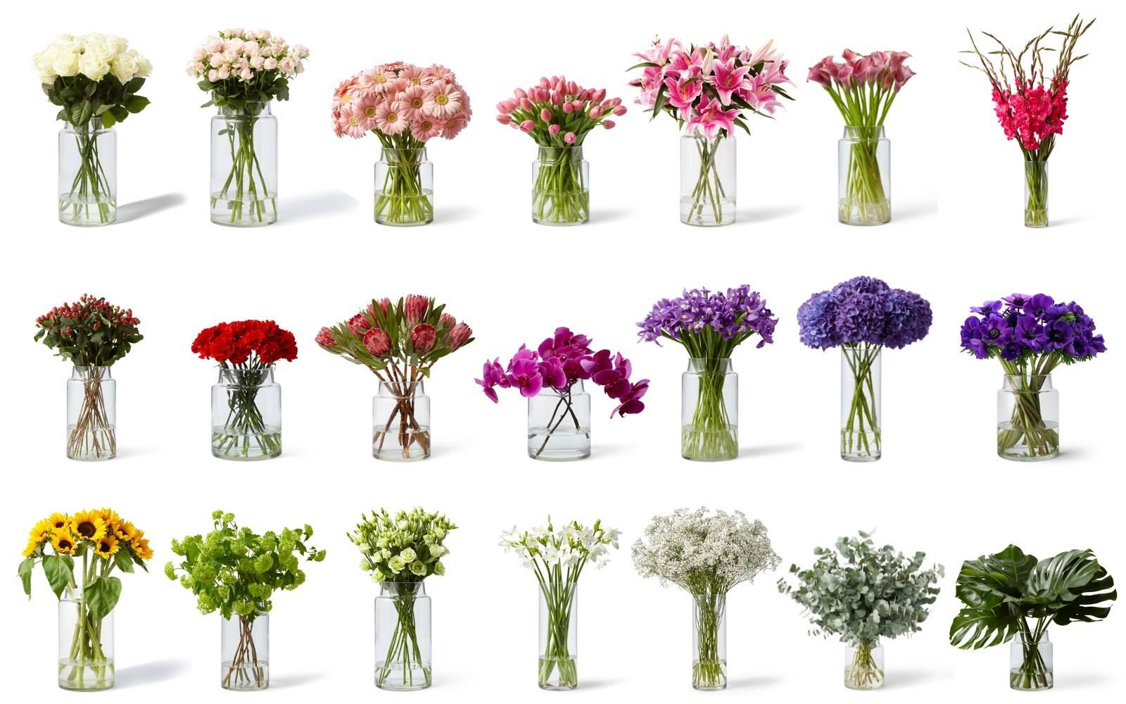 Blumen Farben und ihre Bedeutung.