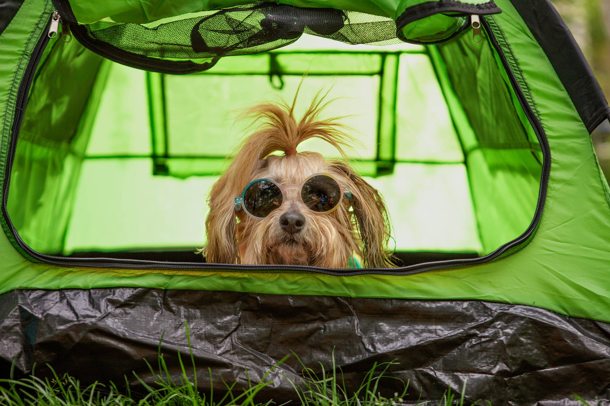Urban Camping Lookbook – DOG & CO