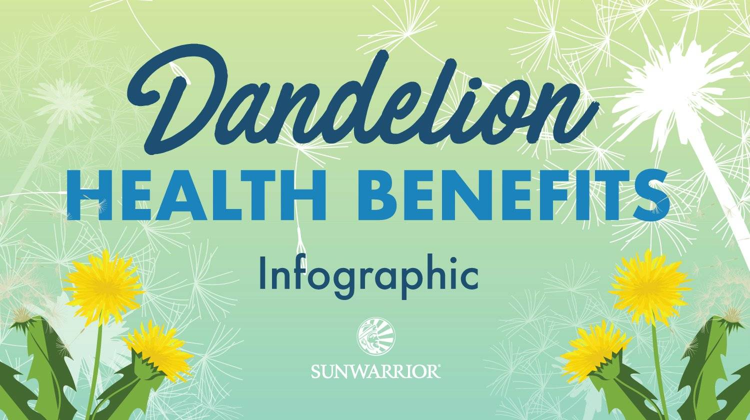 Dandelion Leaves and Root Health Benefits