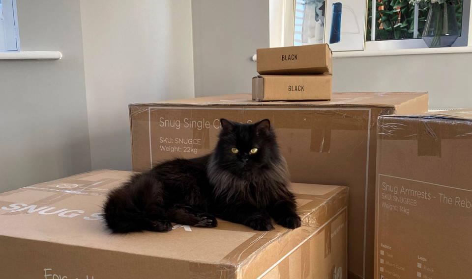 Cat on Snug sofa boxes