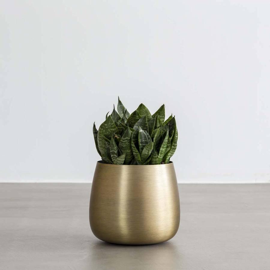「暮らし」×「植物」 Plant Pot ゴールド 3号・4号
