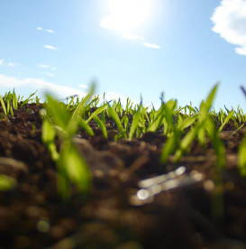 garden-growing-grass-garden-of-your-mind