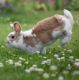 yoga-with-khush-bunny-hops