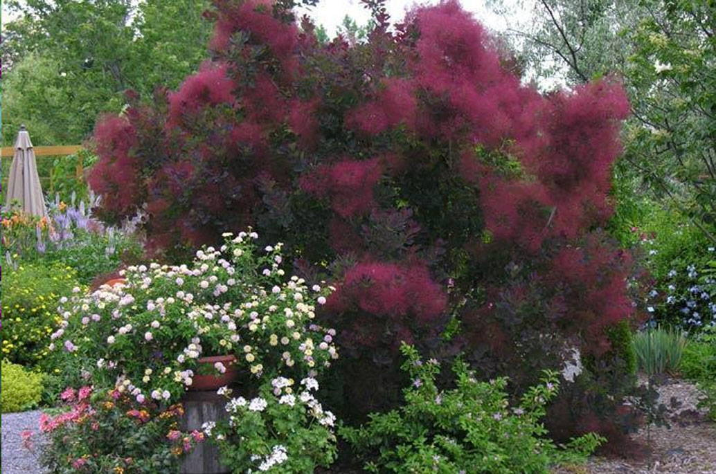 Best Bushes for Fall Color