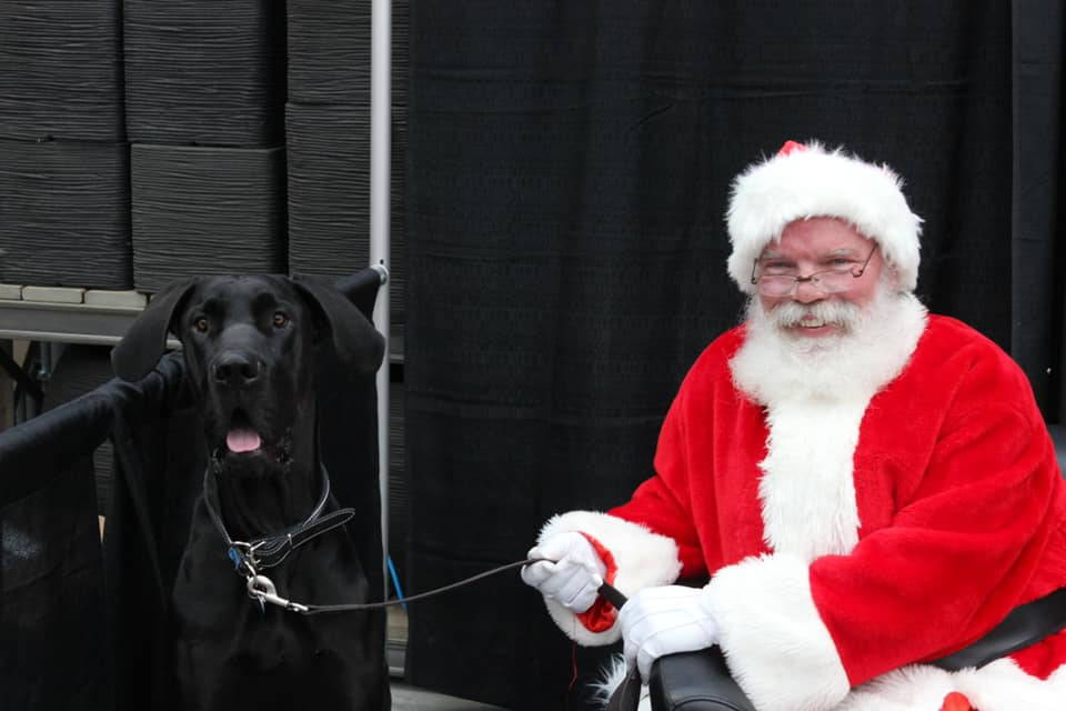 great dane with santa clause