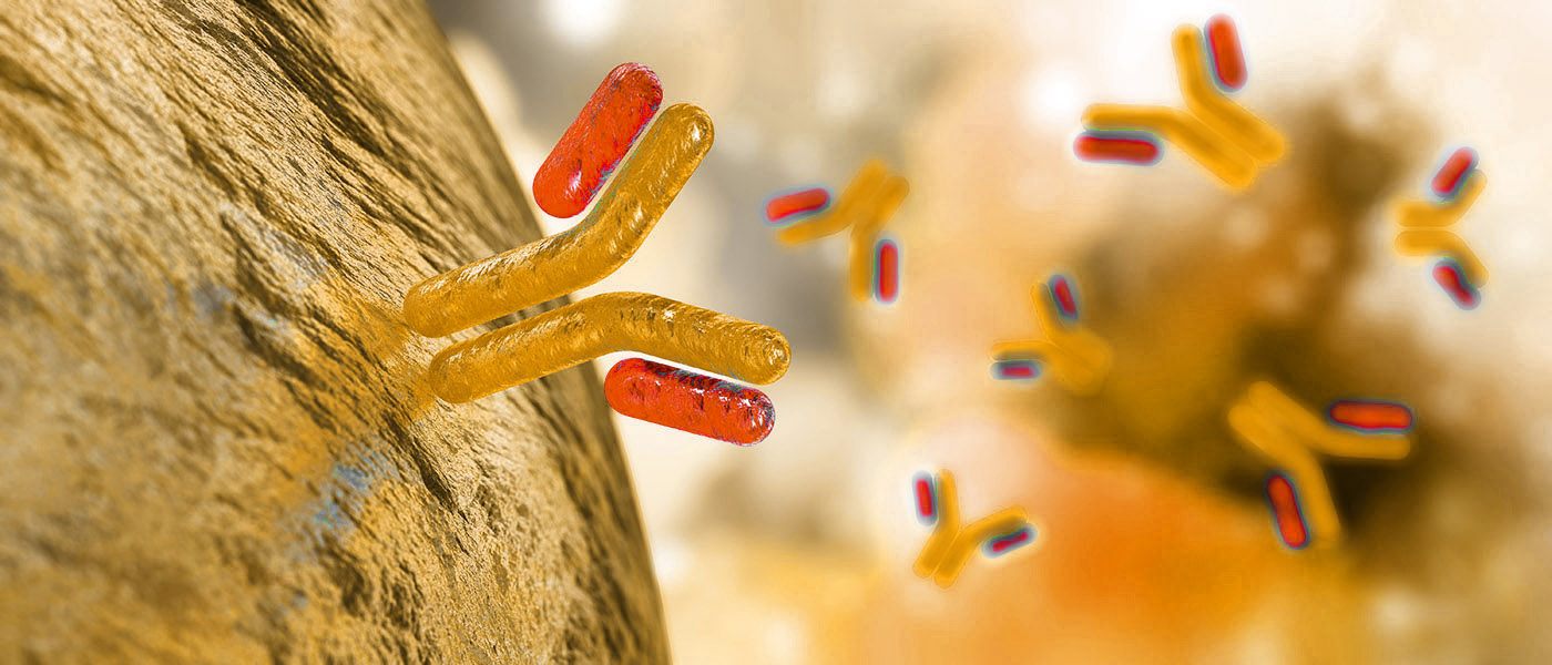 bioQuad antibodies attaching to microbe surface