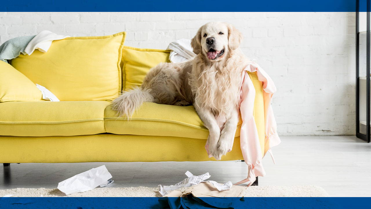 What Furniture Fabric Is Best For A Home With Pets?