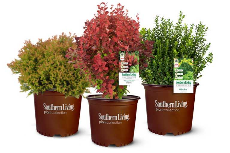 southern-living-plants
