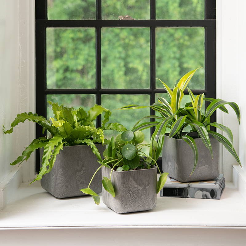 Gray Rubi Square Planter set with green plants next to a window