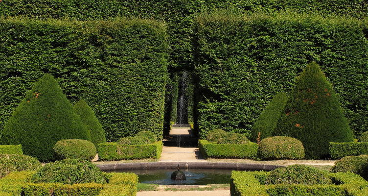 Tips For Planting Hedges and Conifers