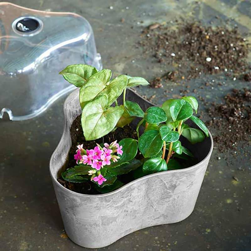 Tri-Pot Terrarium