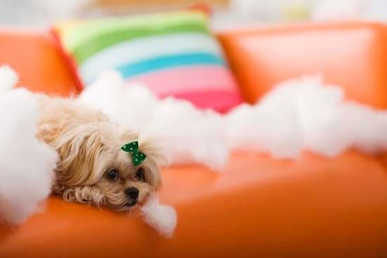 a small tan dog laying on a orange couch with white stuffing surrounding him