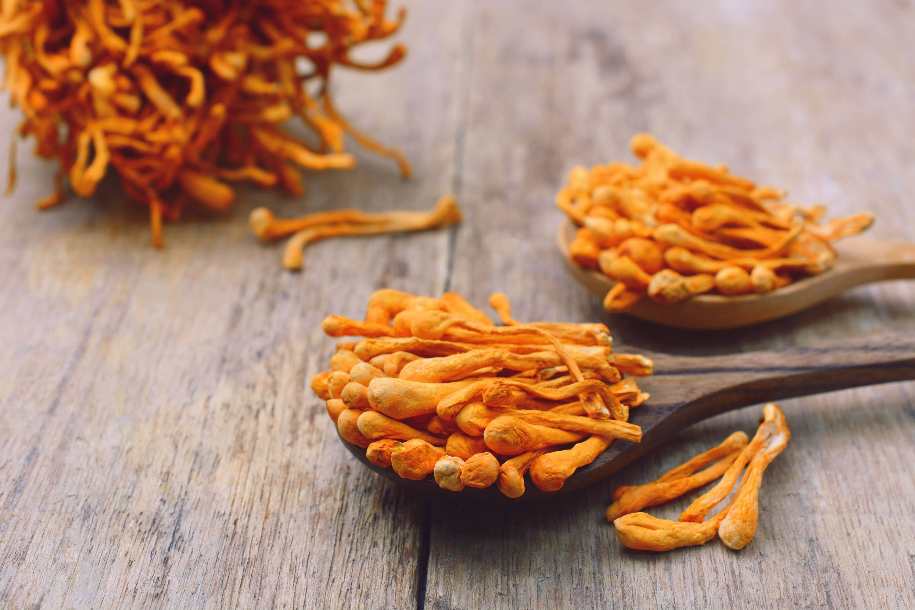 Cordyceps mushroom harvested and dried to be used in mushroom coffee for its health benefits