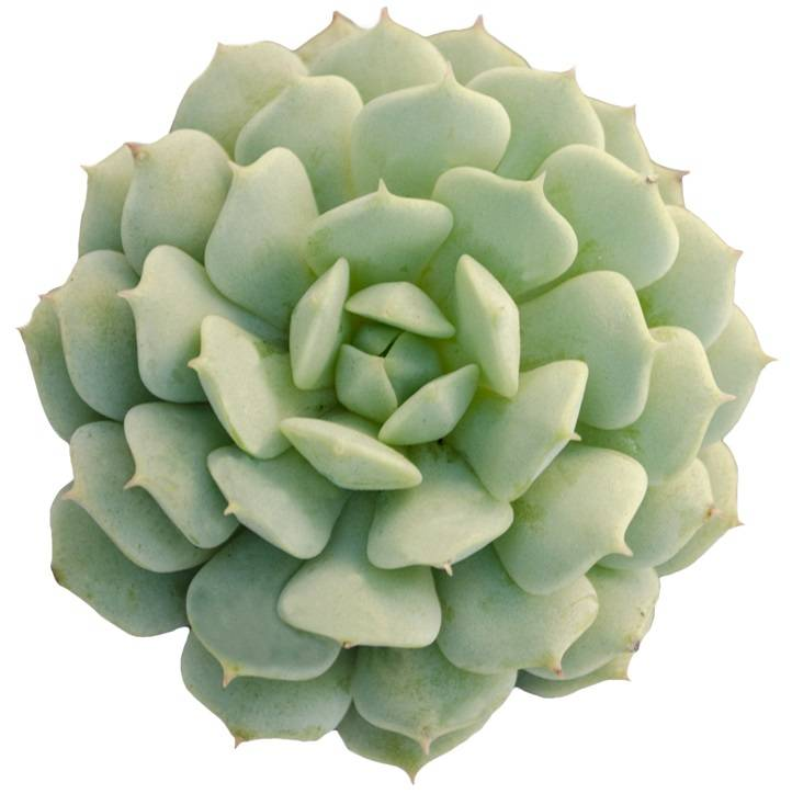 Succulent Types - Succulent of the Month Club Subscription