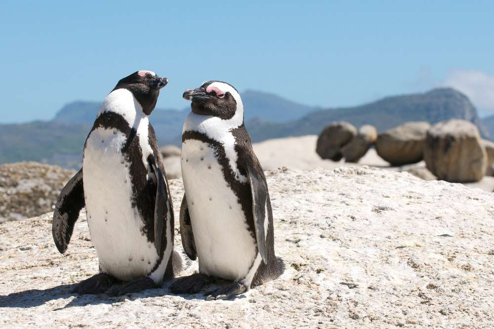 Travelbay Southern Africa Private Tours - Penguins at Boulders Beach