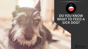 Do you know what to feed a sick dog?