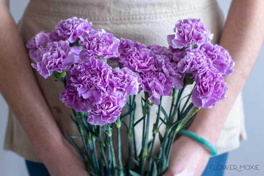 Lavender Carnation Flower