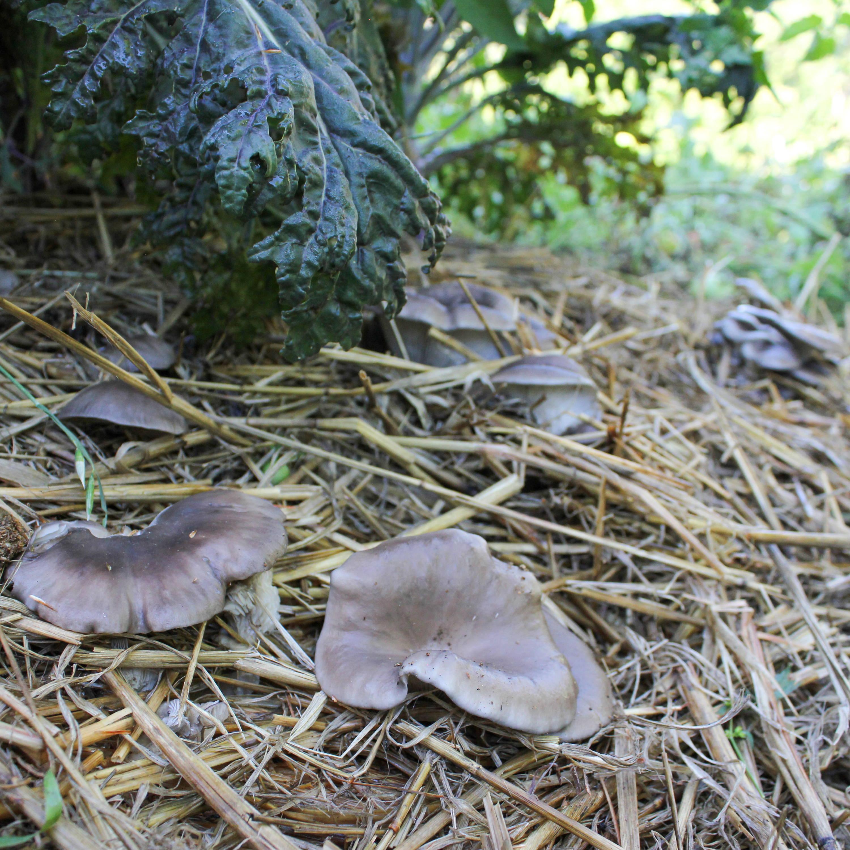 Mushroom Garden North Spore