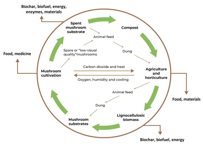 medicinal mushroom sustainability and regeneration
