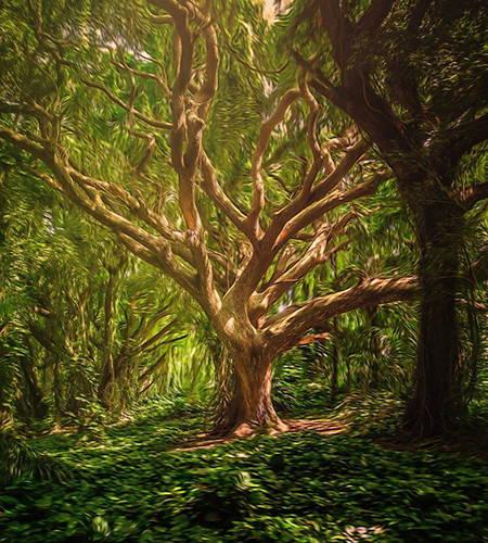 Bild Baum aquarell
