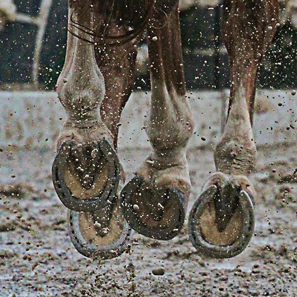 Spring is HERE So is Mud Season muddy horse