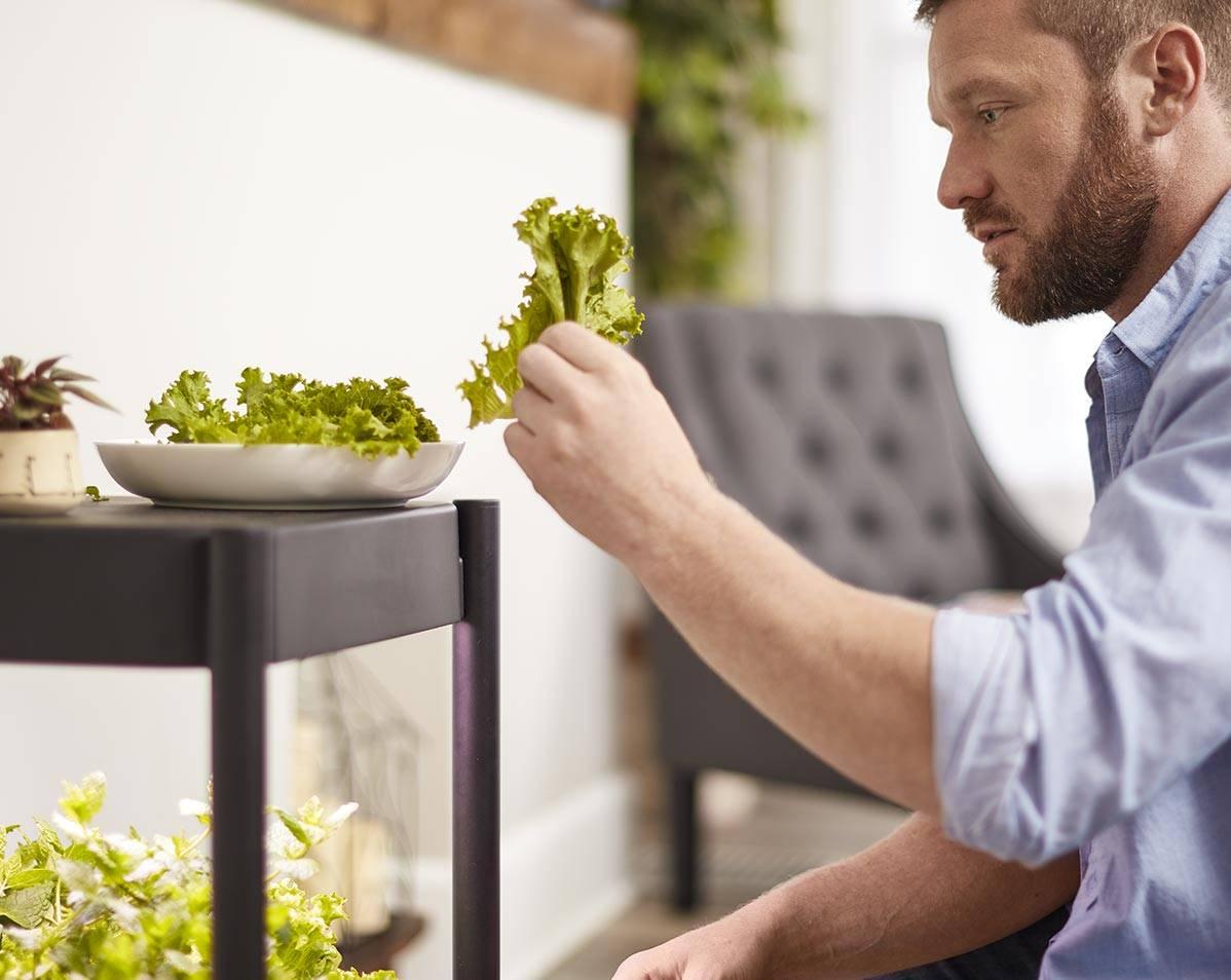 Harvesting from Miracle-Gro® Twelve™ Indoor Growing System