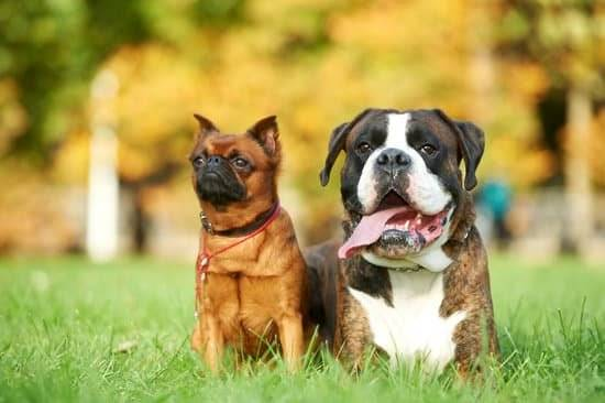 Two dogs sitting together outside in the grass.