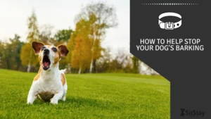 How To Help stop your dog's barking