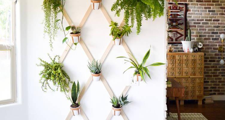 Innovative Zimmerpflanzen