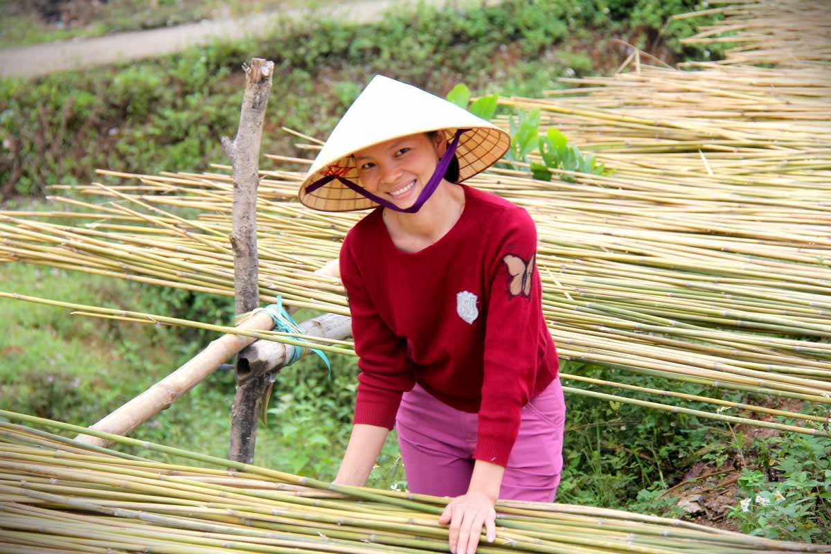 woman drying bamboo straws in preparation for production of bamboo straws