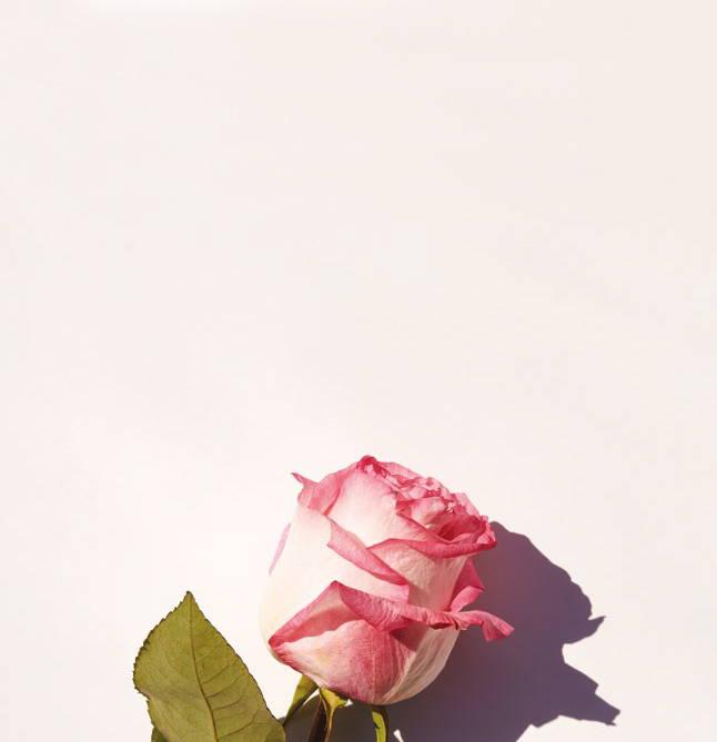 Bastide Roses