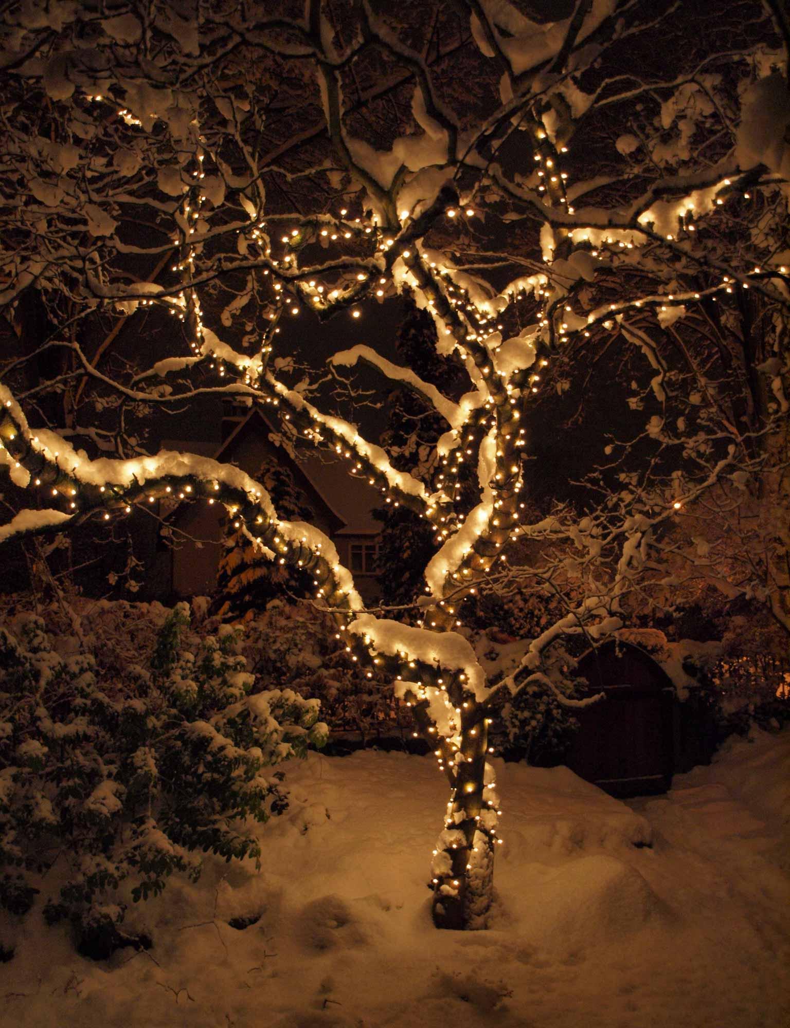 Weihnachtsbeleuchtung Außen Für Große Bäume.Ideen Zur Weihnachtsbaumbeleuchtung Lights4fun De