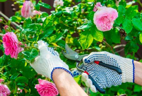 When to Prune Shrubs