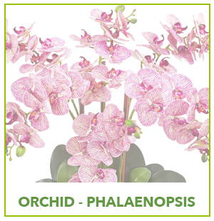 ARTIFICIAL PHALAENOPSIS  ORCHID PLANTS